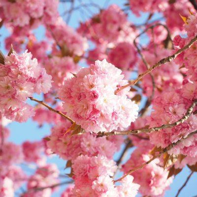Spring.....