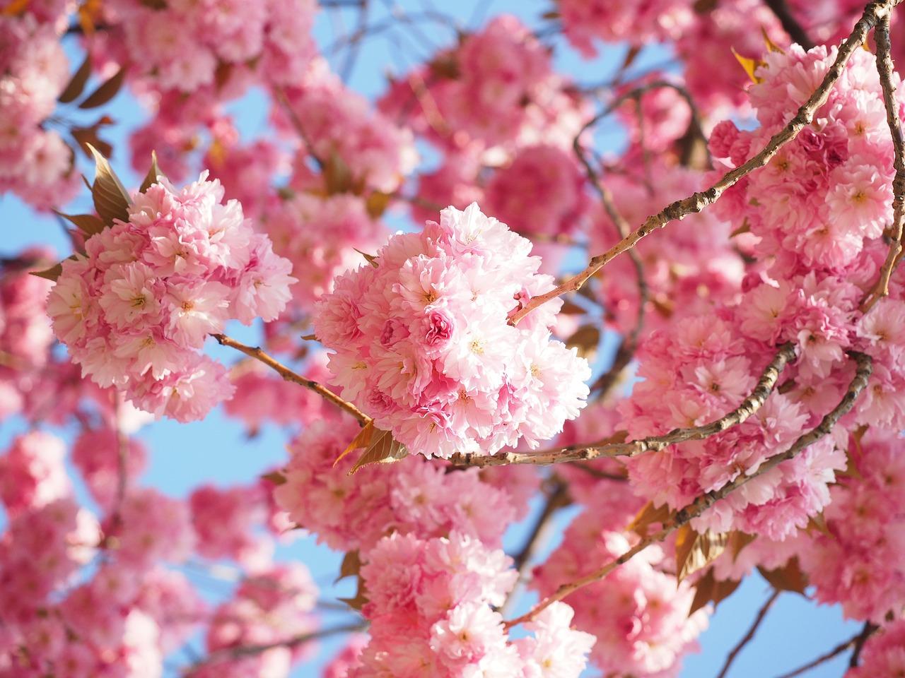 Spring…..