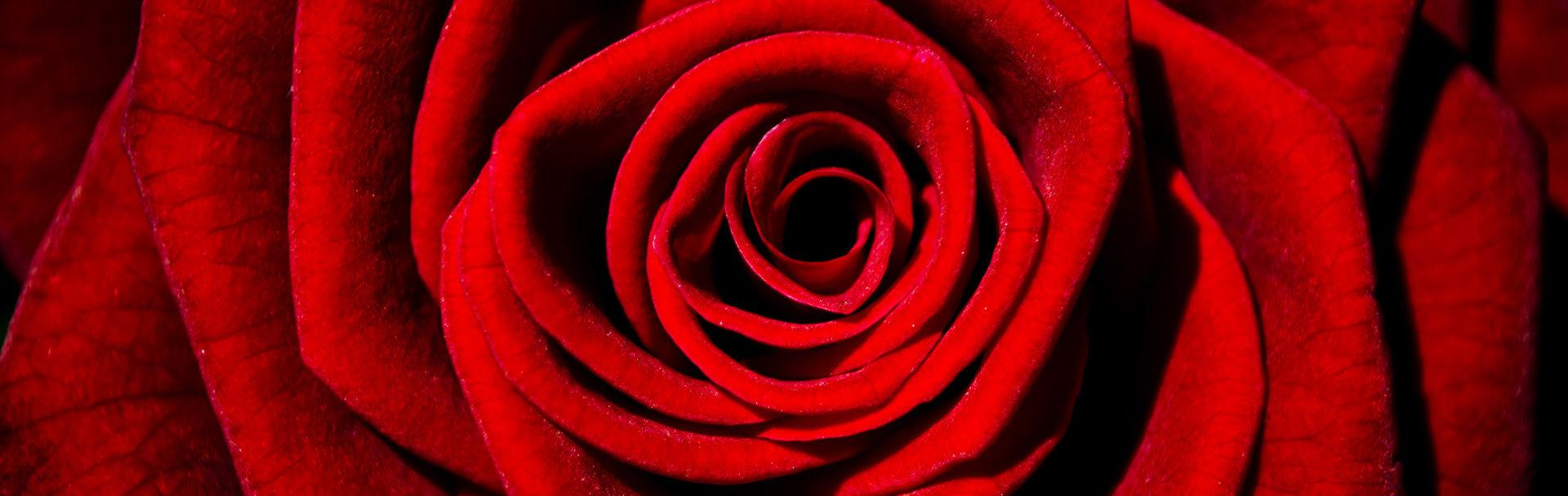 Valentine's Day: A Taste of The Tannin Level